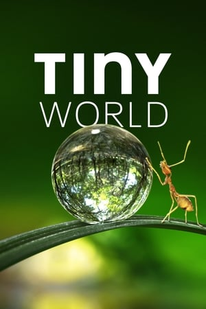 Tiny World (2020) Episode 01-06 End